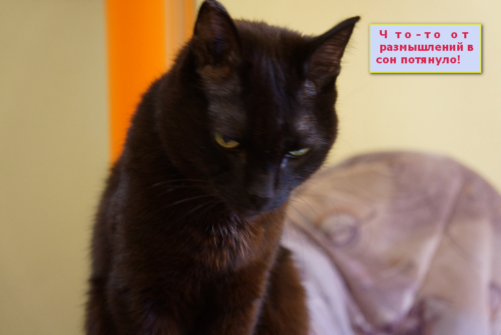 Наш любимец - кот