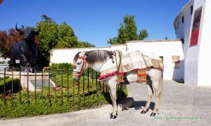 Грустная лошадка томится на солнцепеке