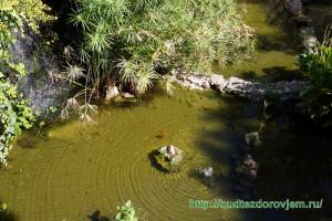 Водоем с золотыми рыбками в Михасе