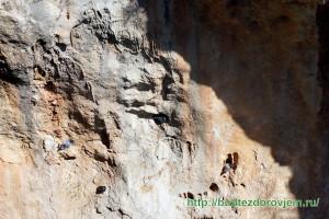 Голуби в расщелинах скалы в парке