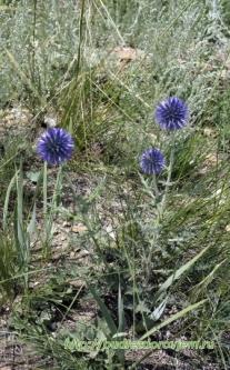 Флора Горного Алтая